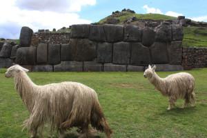Sacsayhuamán ClavarClavitos